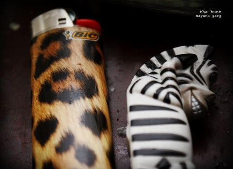 munky hopes the next zebra doesn't try to light up